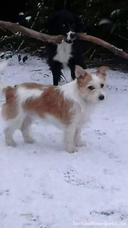[Reunited] Sat, Mar 28th, 2015 Lost Female Dog - Cabra Court, Thurles, Tipperary
