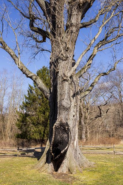 Signal Tree Study #1