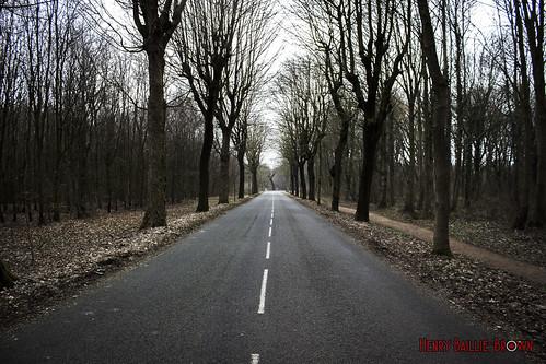 Road to Vimy Ridge