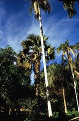 Ägypten 1999 (063) Assuan: Botanischer Garten, Elnabatat's Island