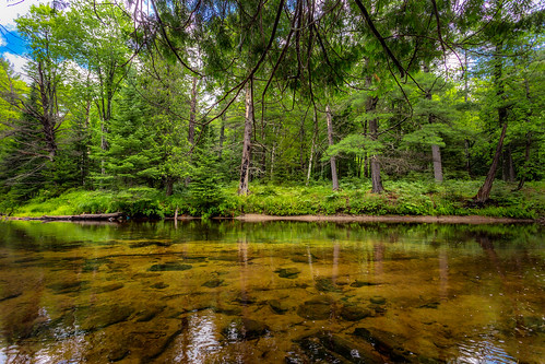 trees summer ontario canada green water creek forest highlands rocks shoreline shore canopy brass kawartha eelscreek