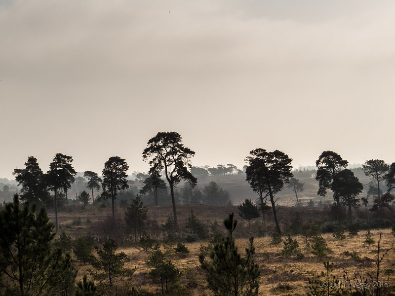 A misty morning on Canford Heath