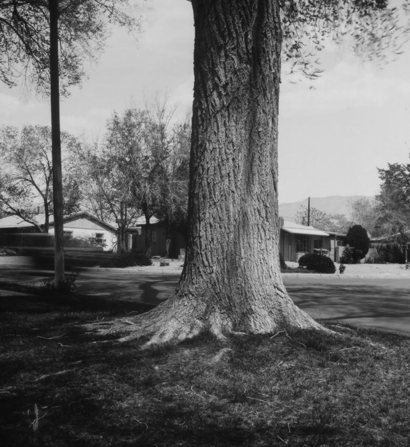 Park&Tree001a