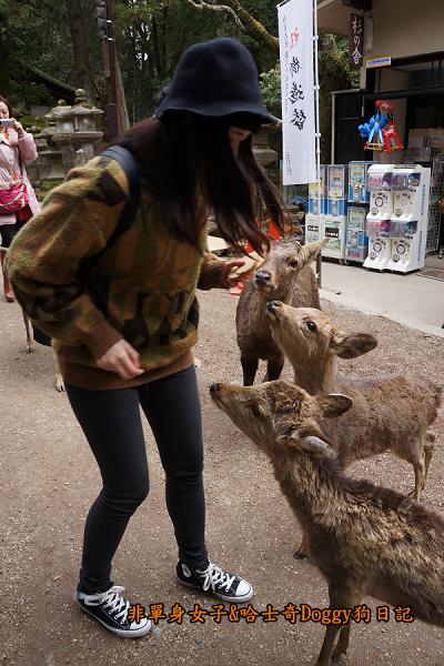 日本奈良公園東大寺18