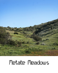 Metate Meadows