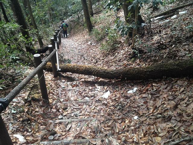 清滝山 登山道 倒木