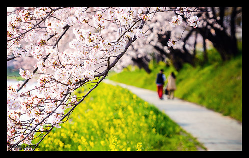 world travel blue summer sky travelling weather japan cherry japanese spring ancient warm view purple blossom culture buddhism best 日本 sakura nippon tradition shinto japon okazaki nihon japani 2014 japón 일본 honshu shintoism 2015 本州 nikond610