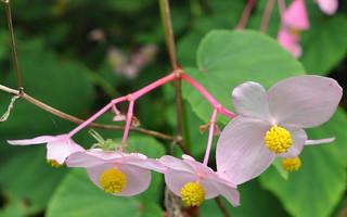 Pink flowers & Green Spider
