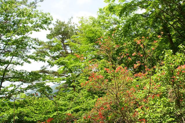 2014-05-24_00128_鍋割山.jpg