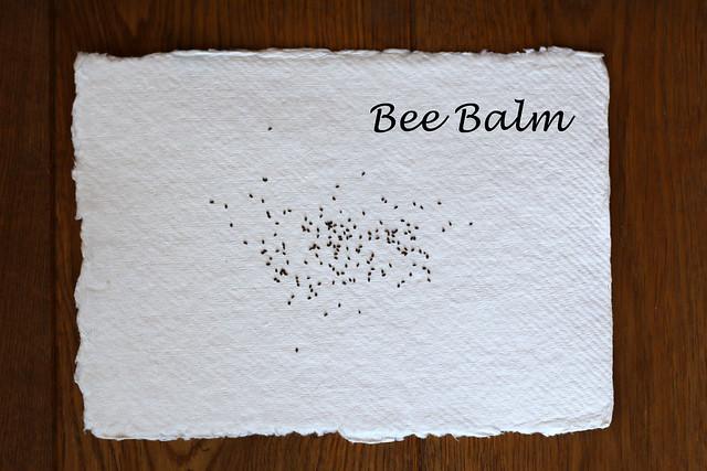 Bee Balm Seeds