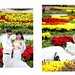 Vườn hoa Bà Nà- Thiên đường tình yêu :)