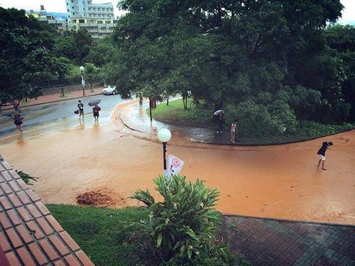 泥流流往靜宜大學。圖片來源:靜宜大學搶救楓香樹林臉書粉絲團