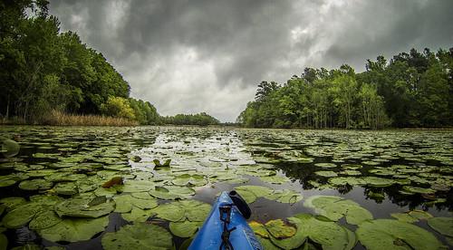 Lake Marion Plantation Islands-003