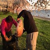 Many come for the #cherryblossoms.  Only the brave come for dinner.  :fishing_pole_and_fish: