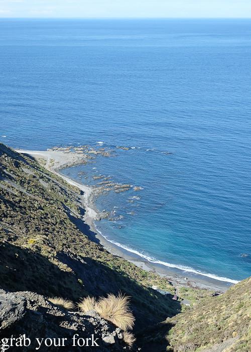 Crystal blue water views during the Seal Coast Safari, Wellington