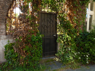 Iron gate with green vegetation in sun-light of Spring in Amsterdam city, 2014 - photo of urban Nature