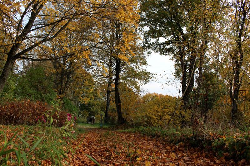 Золотая осень в Чомброве