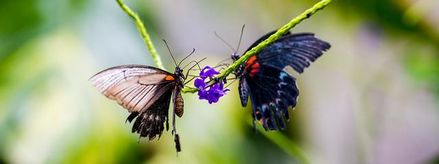 Brand!n - Butterfly Mirror