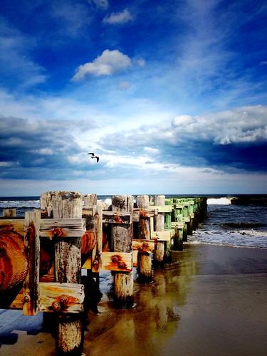 summer beauty freedom seagull jerseyshore avalon 22ndstreet newjerseyshore 7mile avalonnj avalonbeach outfallpipe sevenmileisland 7milestyle freedomatthesea