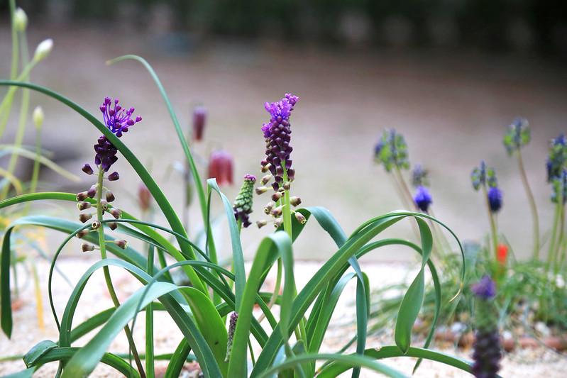 fleurs et plantes jardin botanique madrid