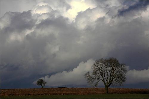 nature belgium belgique arbres nuages paysage wallonie sprimont provincedeliège voiedumoulin