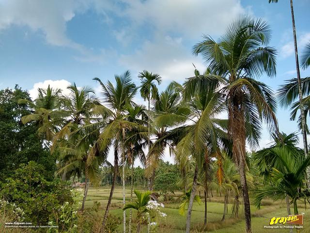 A view along the Udupi - Karkala road via Hiriyadka, Udupi district, Karnataka, India