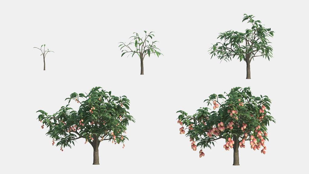 Grow-pa-co1