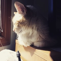 My other sweet kitty in the sun.