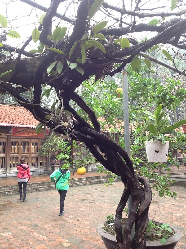 Vinh Nghiem Pagoda (89)