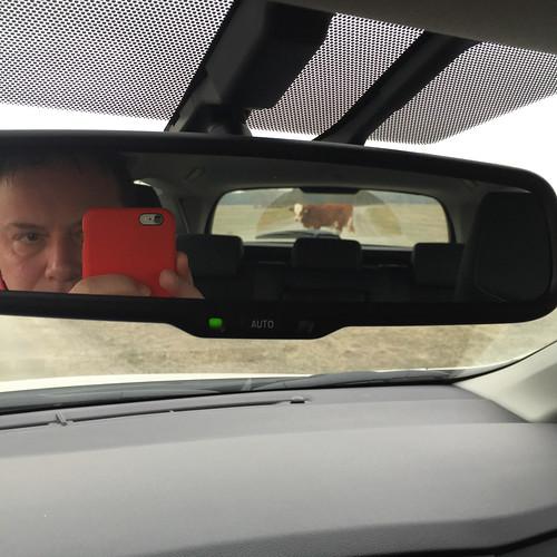brown photography se mirror cow skåne sweden f22 uncropped iphone 2015 skånelän veberöd iphonephoto iphone6 iphone6backcamera415mmf22 lundno ¹⁄₁₂₀sek 2915032015143639