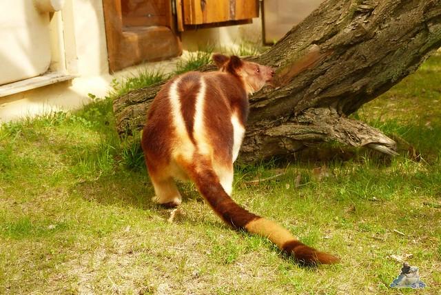 Eisbär Fiete Zoo Rostock 11.04.2015 Teil 1 6