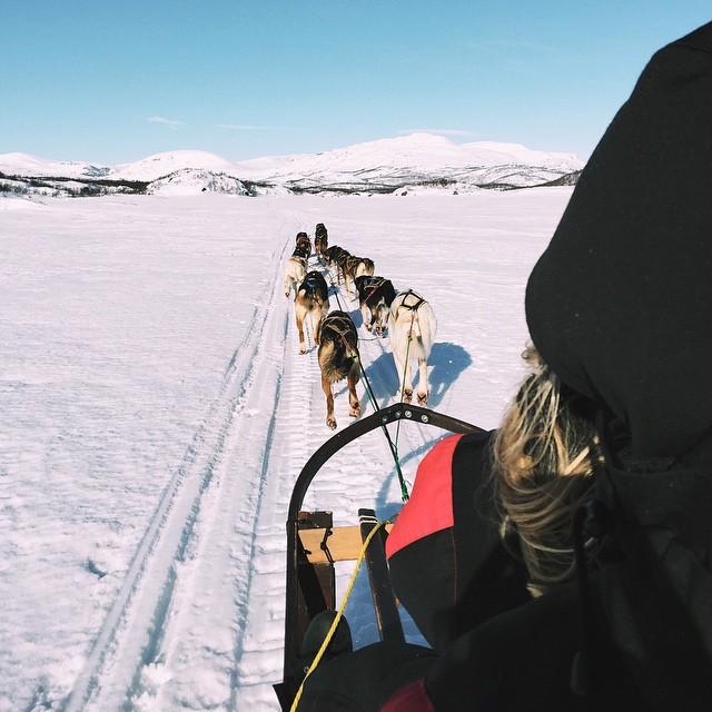 #WTDxWLP #visitsweden #björkliden #riksgränsen #dogsledding