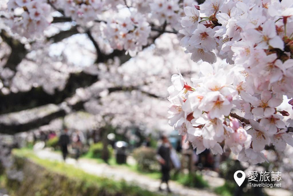 京都赏樱景点 哲学之道 16