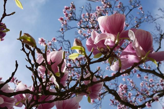 日, 2015-04-19 13:42 - Brooklyn Botanic Garden