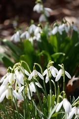 土, 2015-04-04 12:22 - Brooklyn Botanic Garden