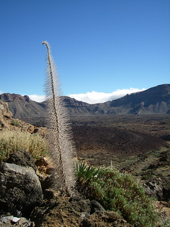 Image of El Teide. canarias tenerife spanje playadeloscristianos
