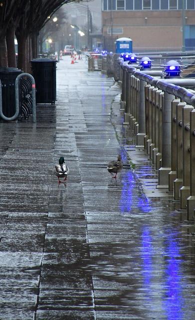 rainy day walk