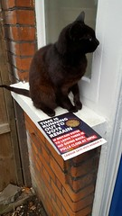 Let me vote! Cat against Brexit