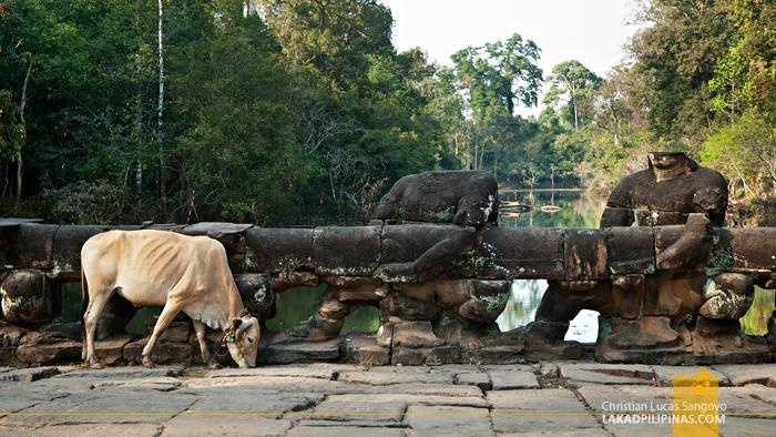 Preah Khan in Siem Reap