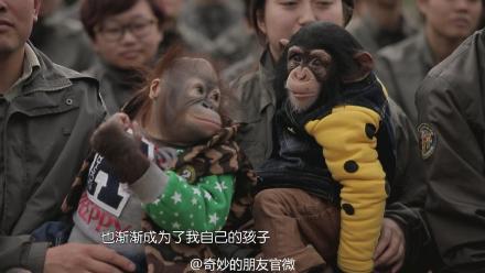 藉由藝人與野生動物演出節目獲得收視率的成功。圖片擷取自:奇妙的朋友官方微博