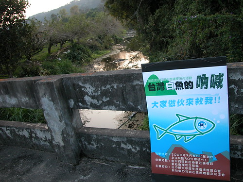 2008年搶救台灣白魚活動的宣傳告示,2008.03.05,大甲溪生態協會提供