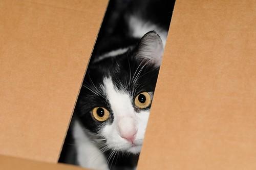 Gatto in scatola 2