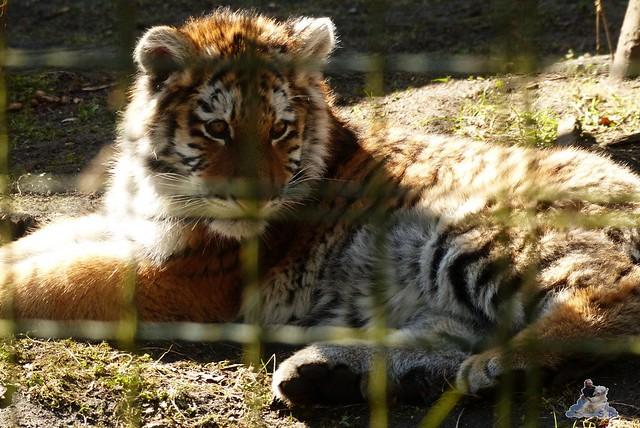 Zoo Eberswalde 22.03.2015   20