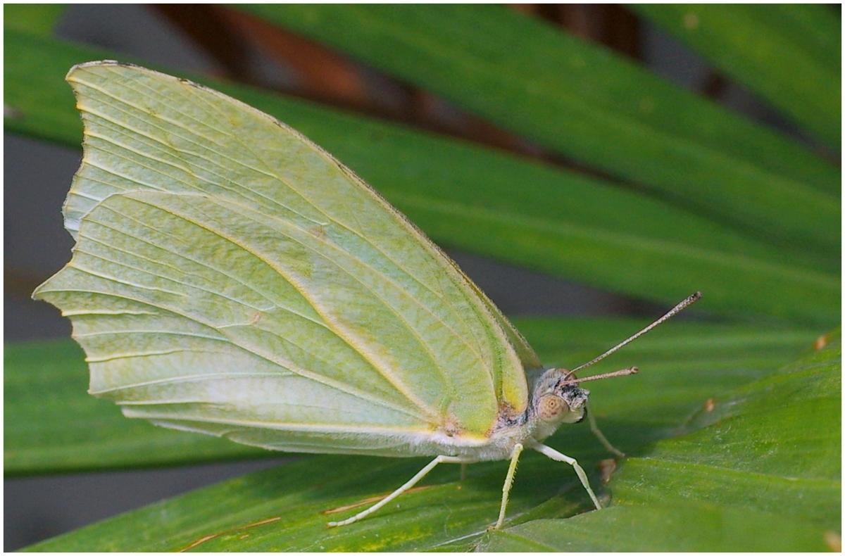 Papillons en Fêtes 2015 16804031827_ab134f69d1_o