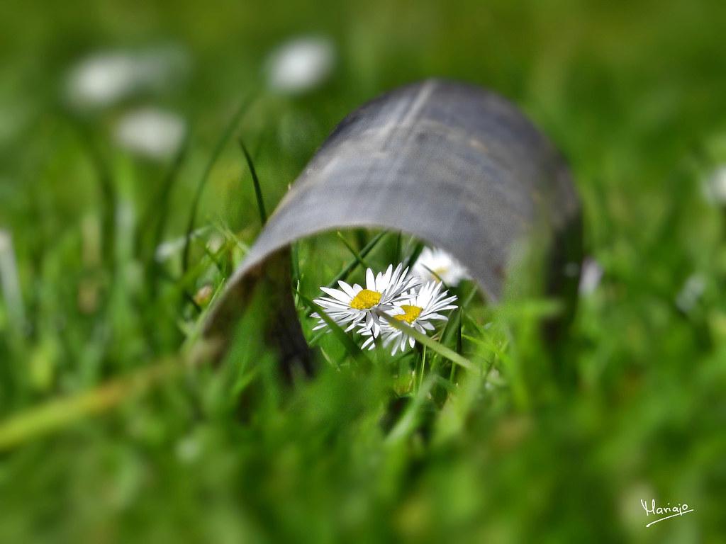 Primavera... ¡¡¡ por un tubo!!!