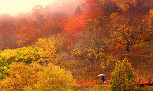 autumn trees leaves umbrella canon walking couple path hills adelaide bec southaustralia botanicalgardens adelaidehills mtlofty 450d 55250mm findyourhappy decidewithyourwholeheartthatthisdayismadetobeenjoyed