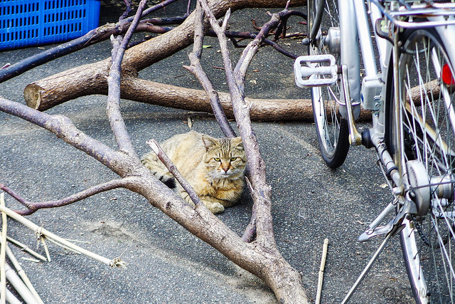 Today's Cat@2016-05-04