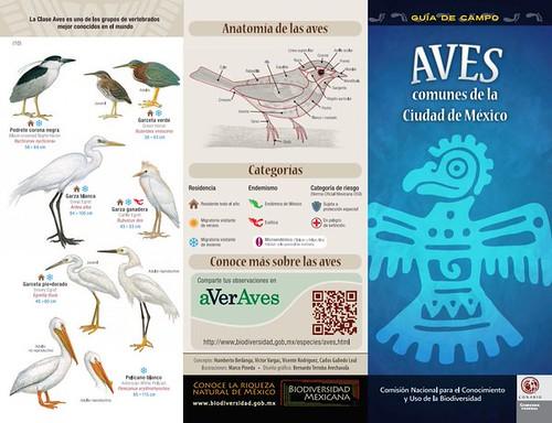 Aves de la Ciudad de México / Birds of Mexico City