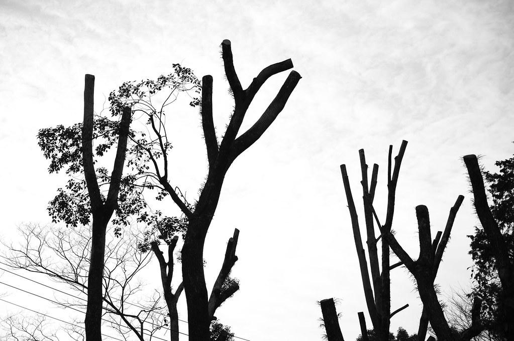 winter trees|京都市西京区
