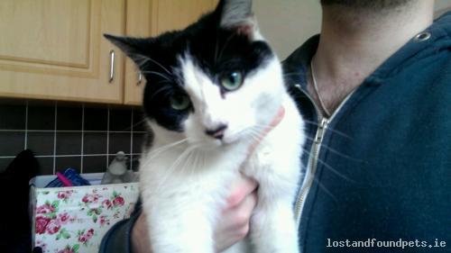Sun, Mar 29th, 2015 Found Male Cat - James' Street, Dublin 8